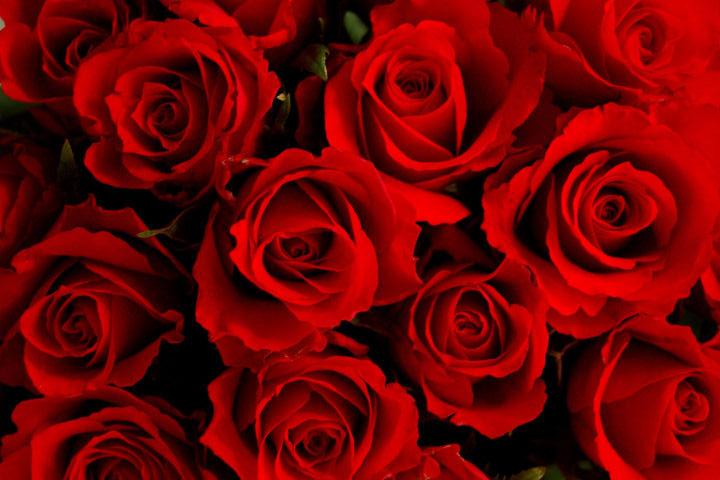 خرید اسانس گل رز