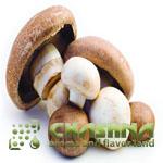 خرید طعم دهنده پودری قارچ خوراکی